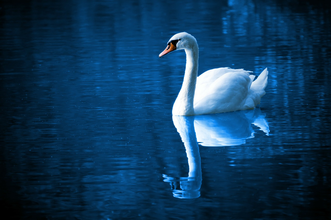 The Love of Tired Swans ディマシュの実力が最大限に発揮されている歌